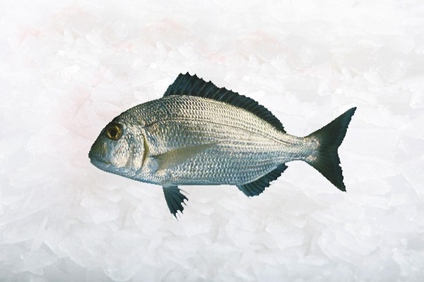 ماهی صبیتی Sobaity bream