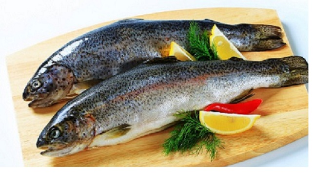 Empty stomach trout